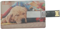 Next USB Sweet Labrador 32 GB Pen Drive Multicolor