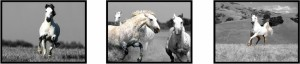 White Horses Fine Print Glossy Acrylic Art Paper