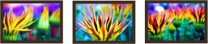 Colorful blossom Fine Prints Fine Art Print