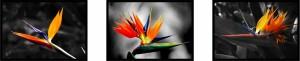 Bird Of Paradise Flower Fine Art Prints Glossy Acrylic Paper